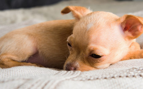 Puppy Diarrhea – Causes Symptoms Treatment and Prevention