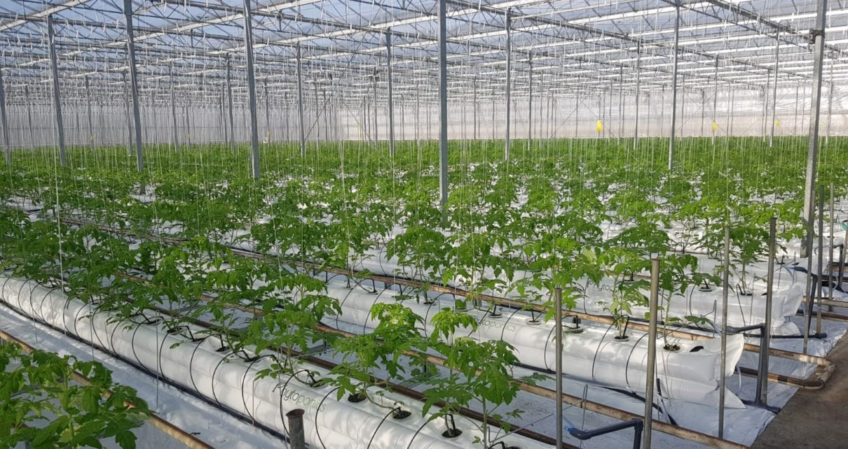 Planning to be one of the hydroponic farming