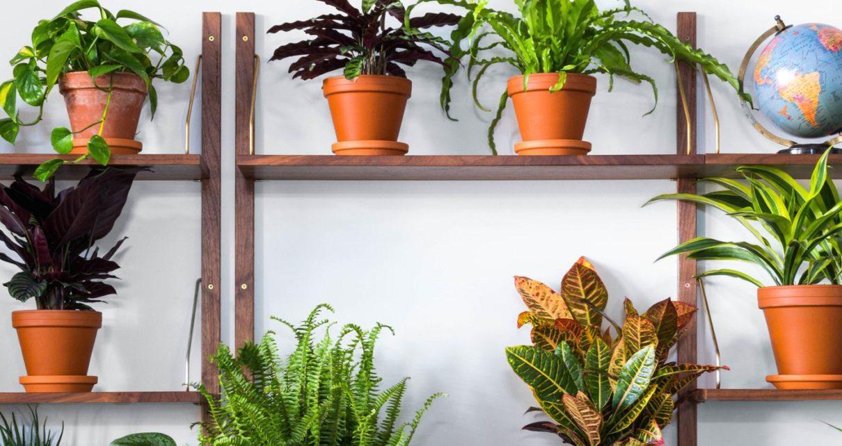 indoor decorative plants online