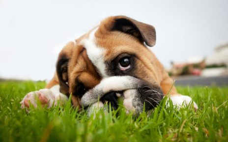 Free Help with Dog Behavior Problems: 3 Effective Cures